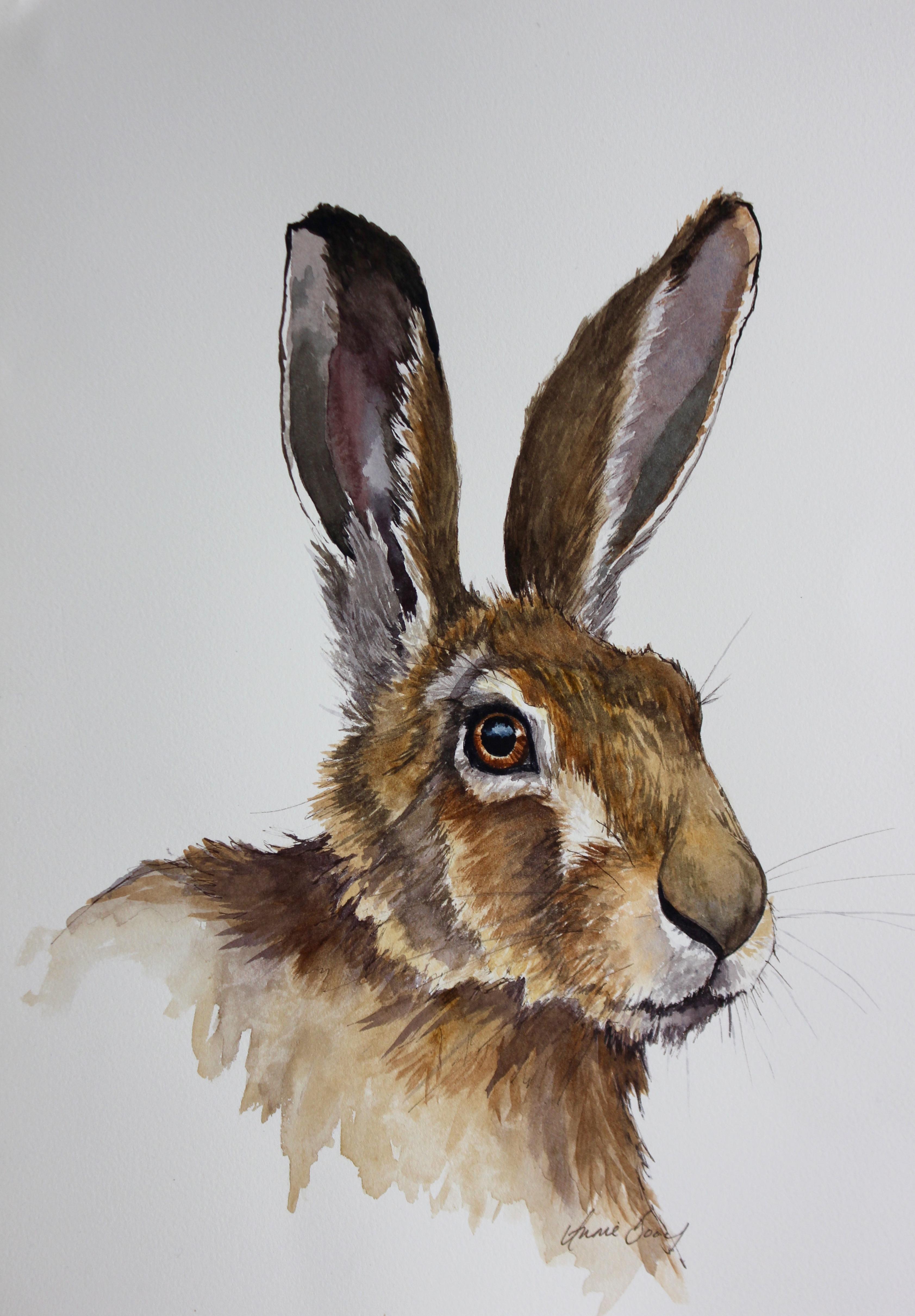 Hare 17/2