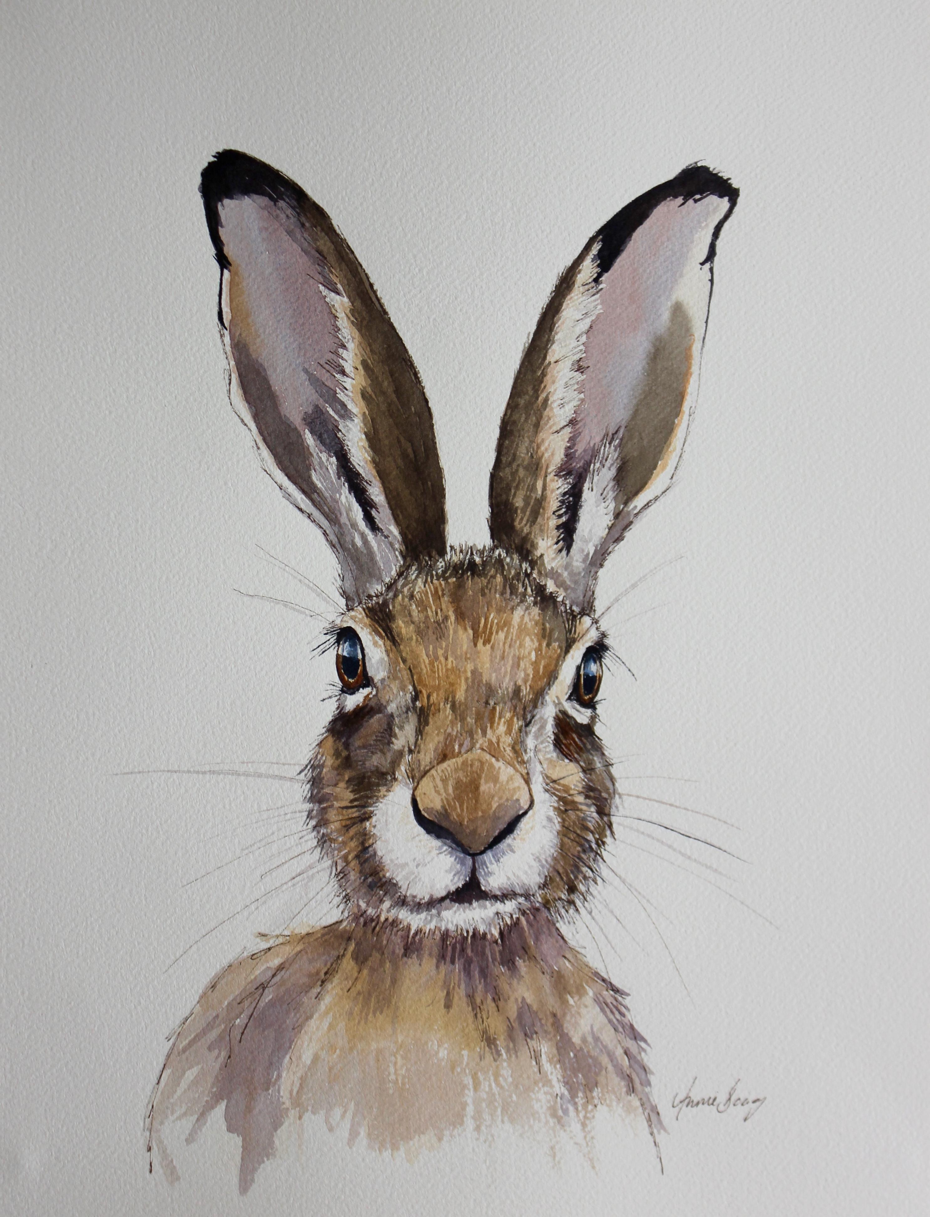 Hare 17/6