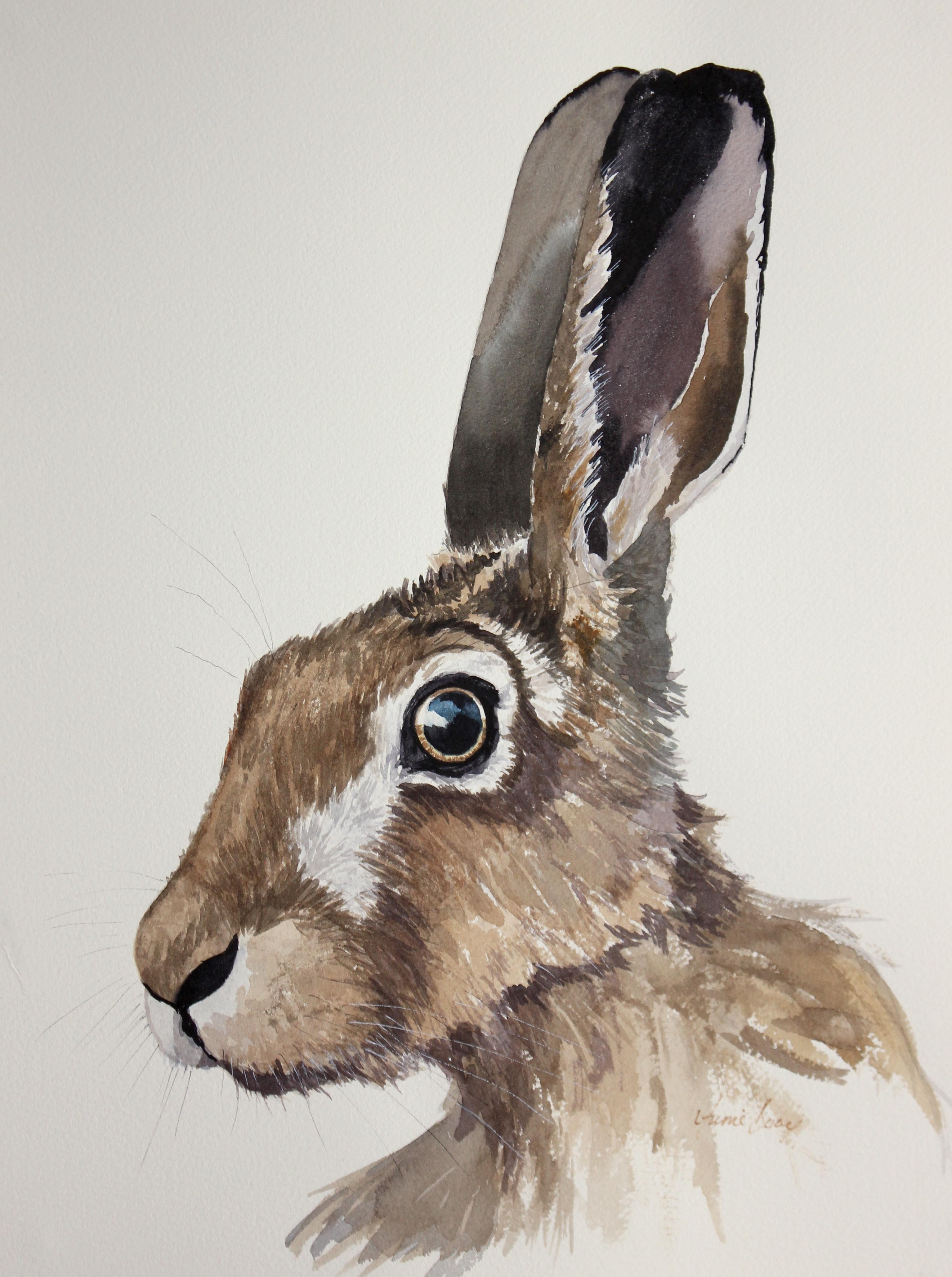 Hare 17/7