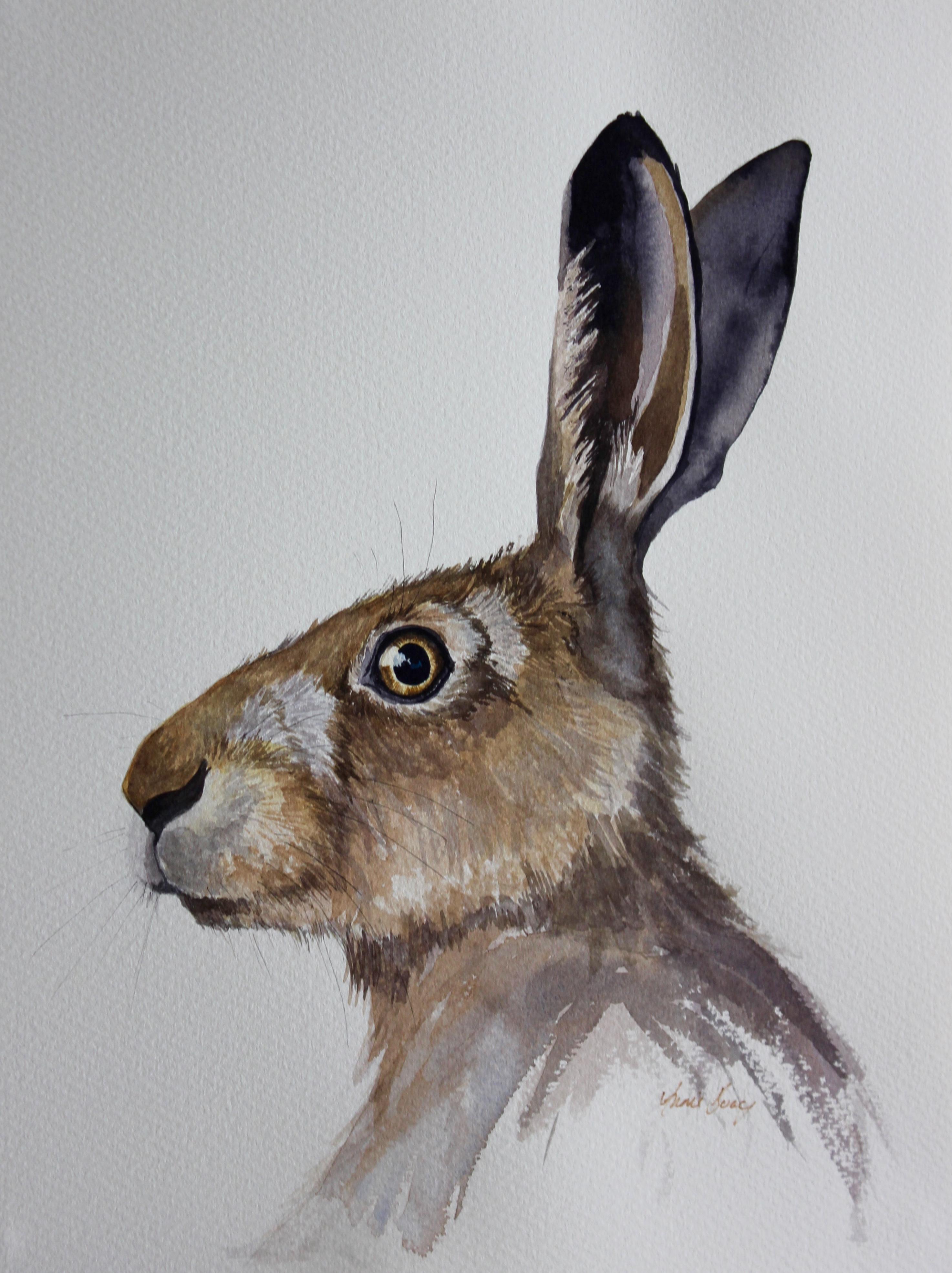Hare 17/8