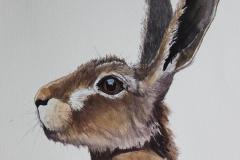 Hare 17/3