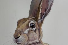 Hare 17/4