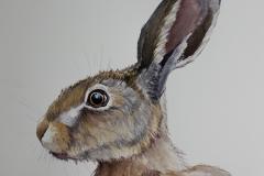 Hare 17/5