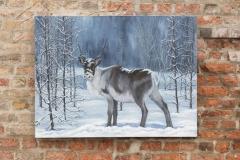 Swedish Reindeer